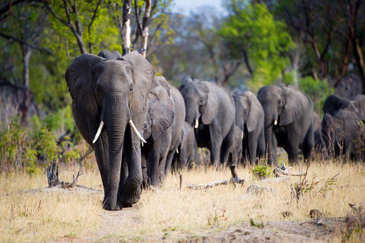 Zimbabue ruge otra vez