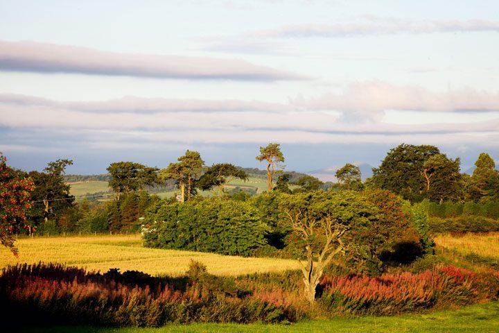 En tierra de reyes: Fife