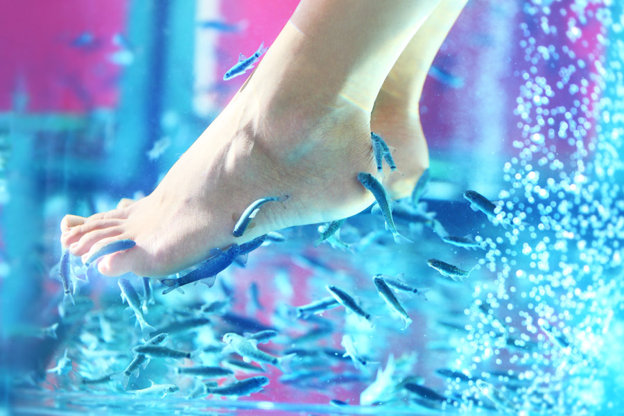 Relájate en el Fish Spa en Cozumel Palace