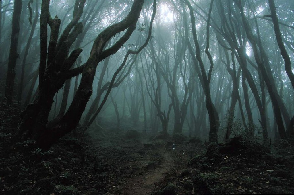 Bosque de Hoia Baciu