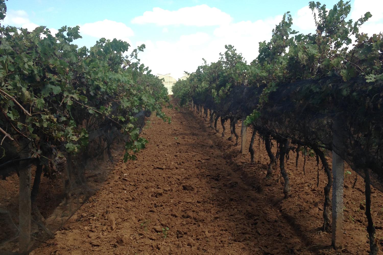 Zacatecas: la tierra ya dio sus frutos