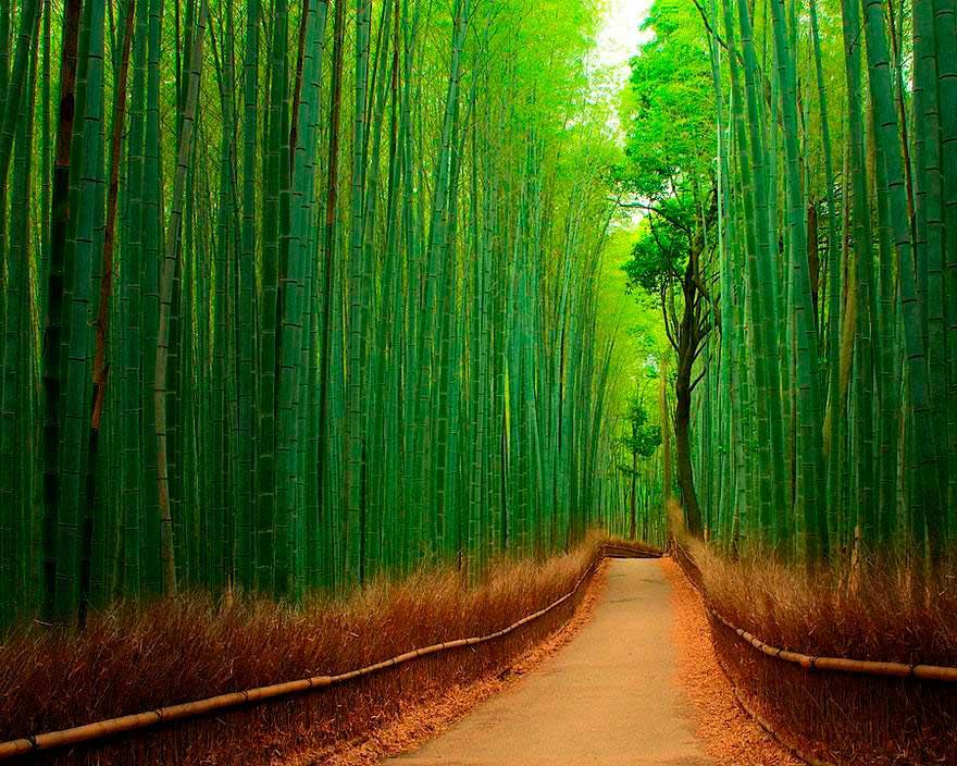 5 bosques encantados en el mundo