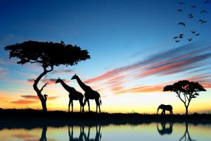 Viaja en avión directo hasta África