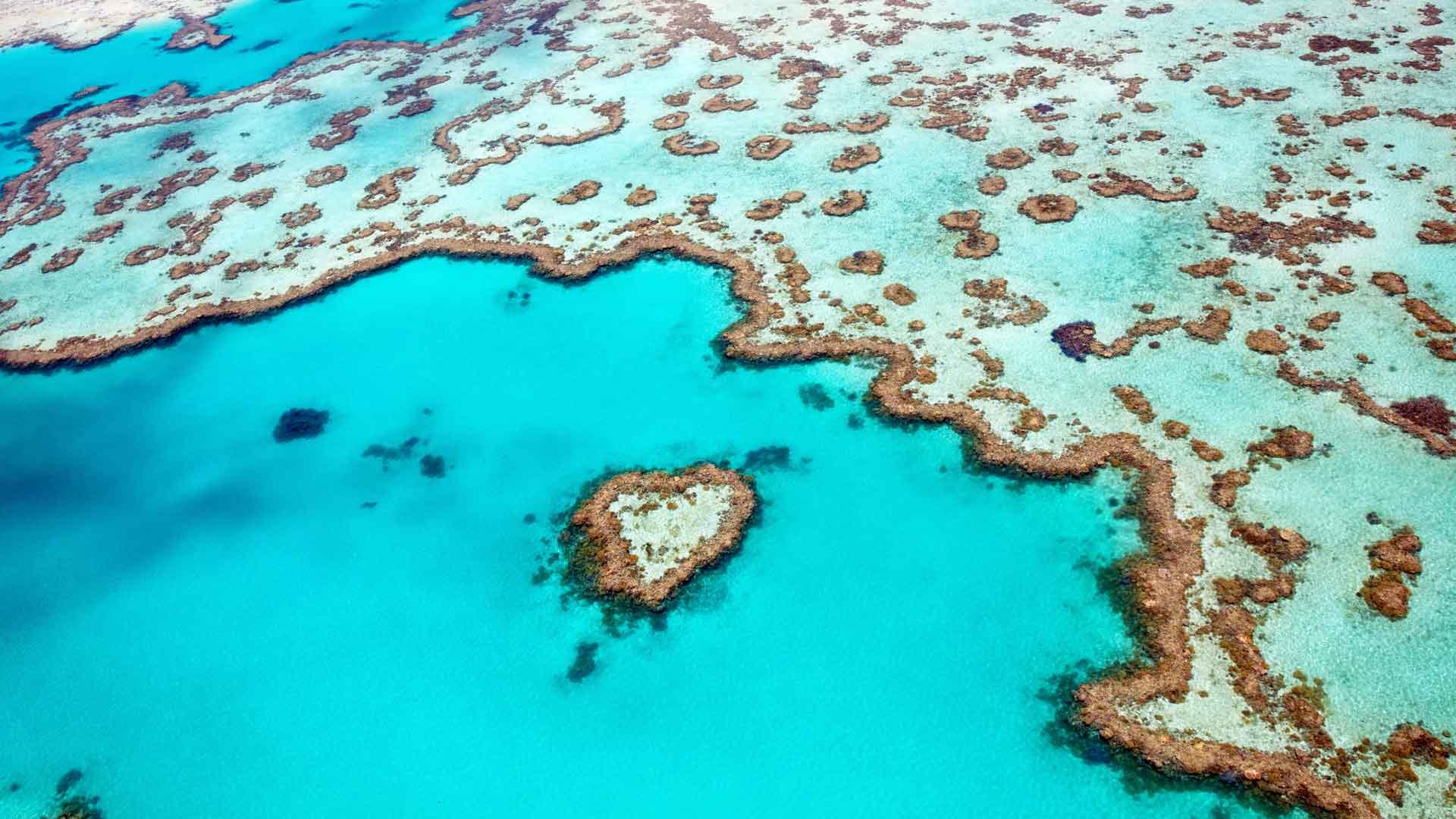 Belleza marina: arrecifes de coral en el mundo
