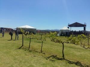Festival 100 vinos mexicanos: al vino, vino