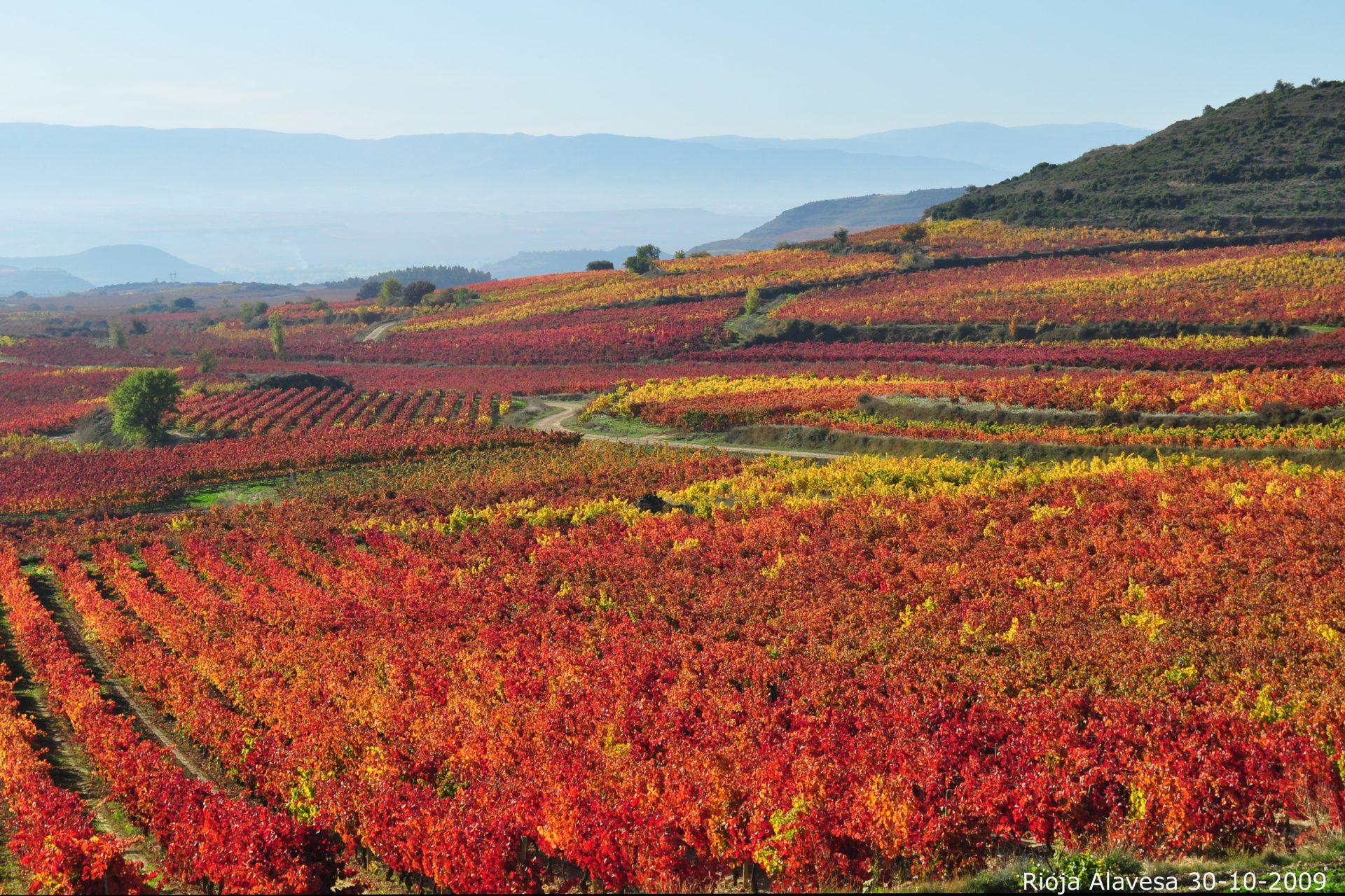 México movido por los grandes de la Rioja