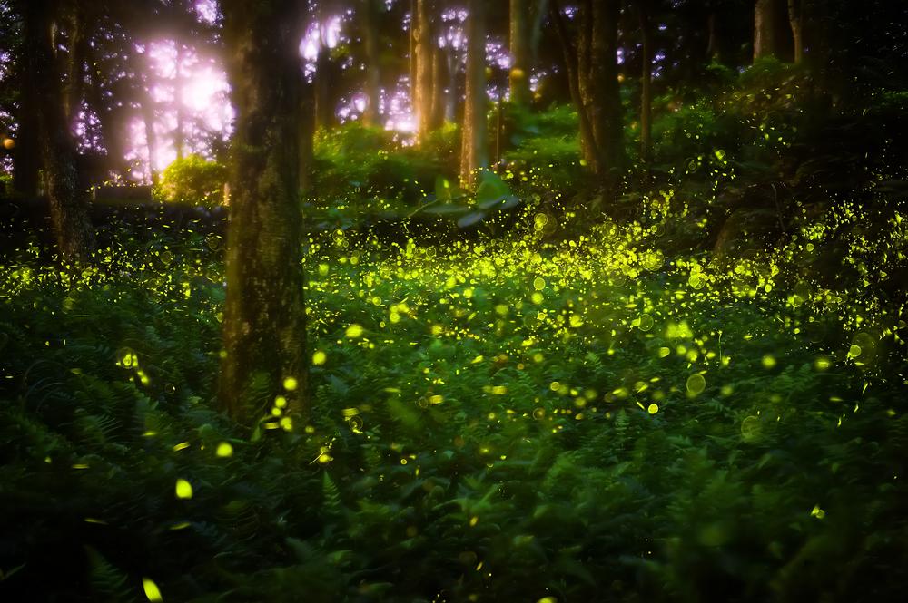 Santuarios de luciérnagas en el mundo