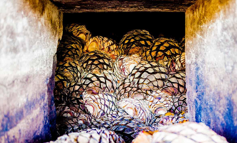 Tequila Herradura: agave, tierra y tradición