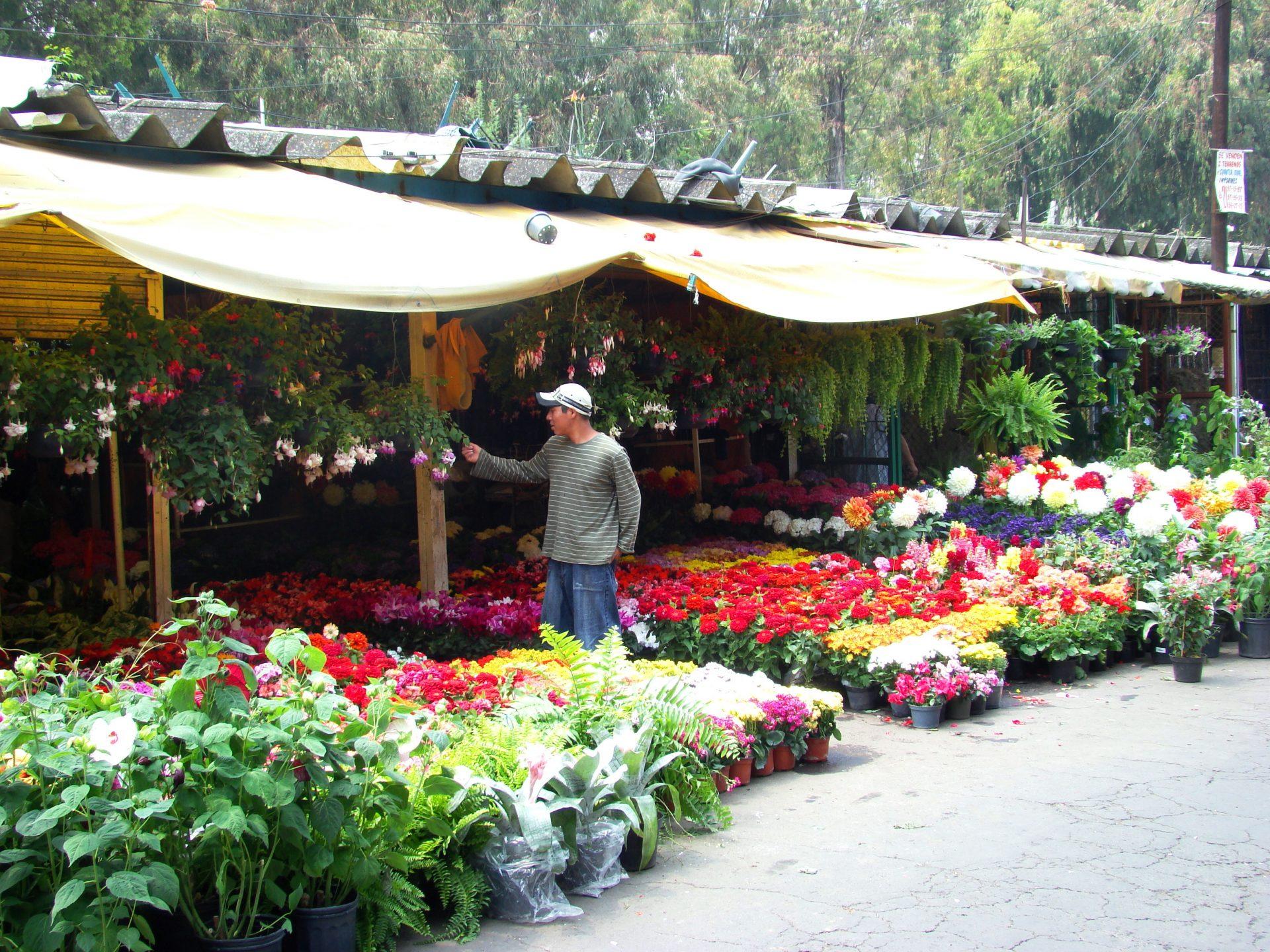 Top 5 De Mercados De Flores En La Ciudad De Mexico