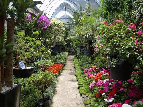 Top 5 de mercados de flores en la ciudad de m xico for Viveros de plantas en buin