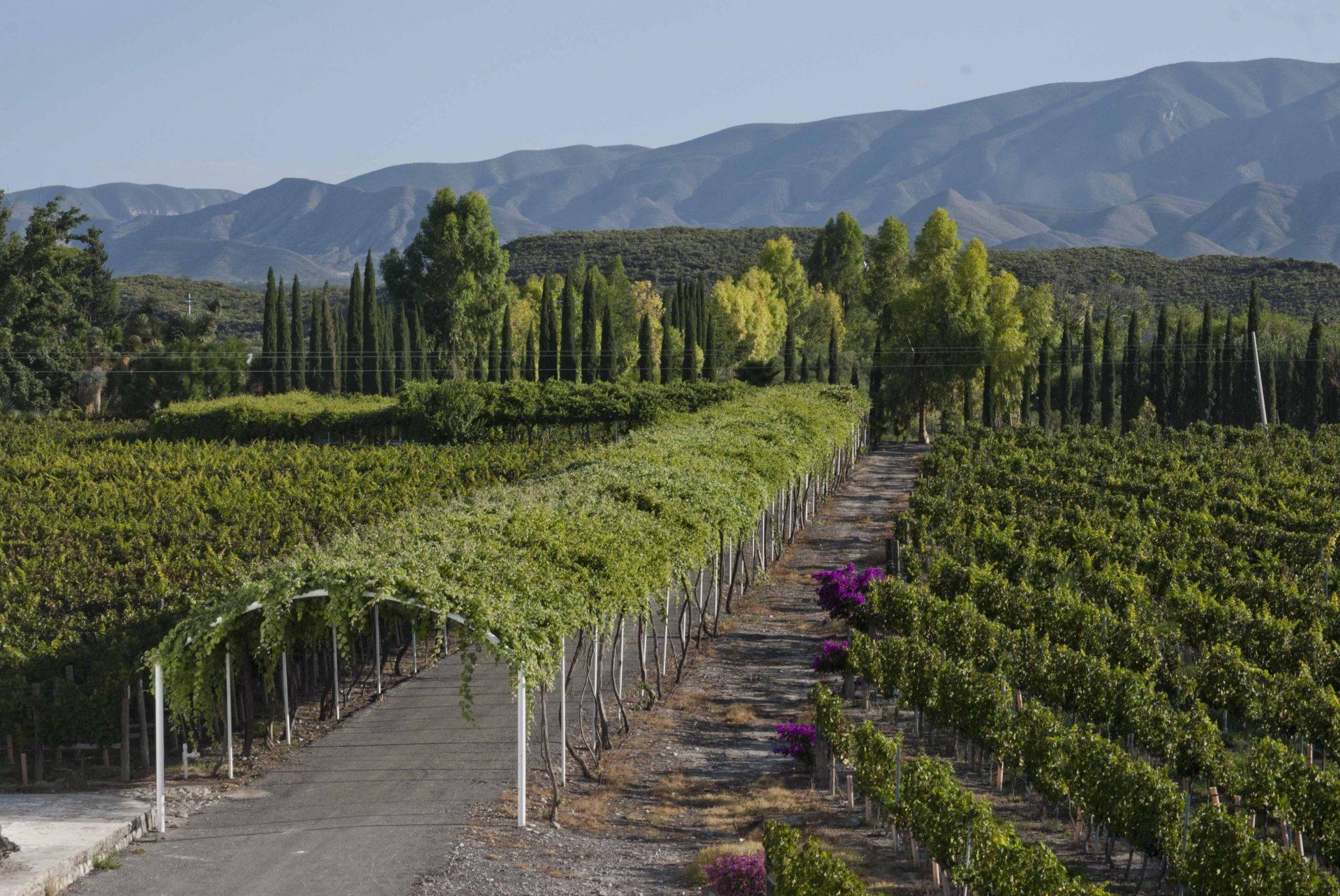Casa Madero, primer Vino de Pago de América