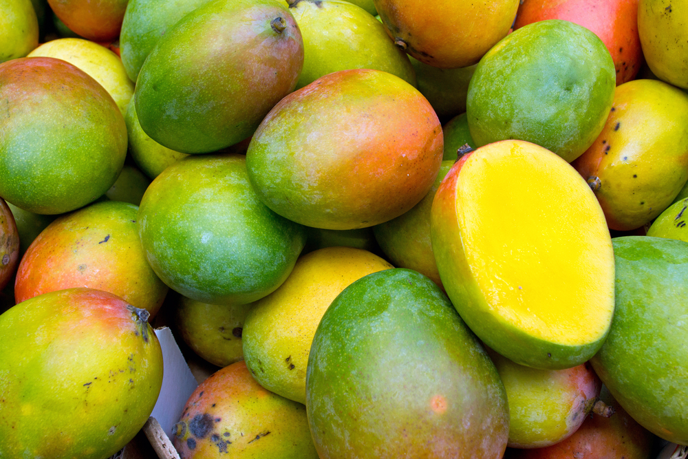 Todos Santos celebra el Festival del Mango