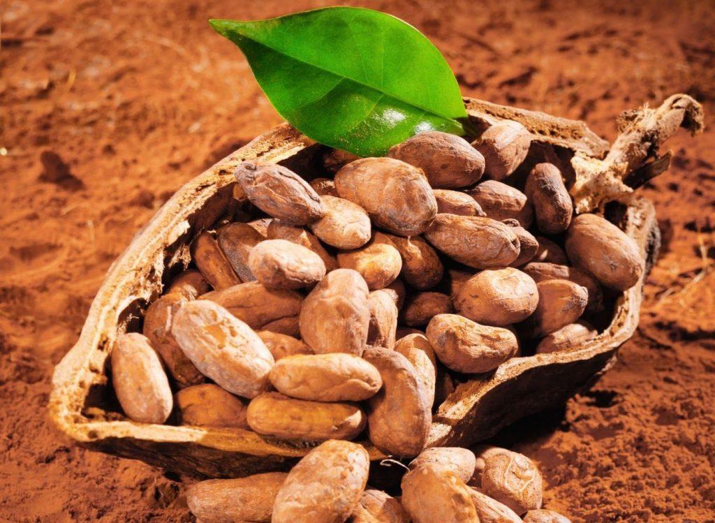 COCAMA llegará al Salón del Chocolate y Cacao