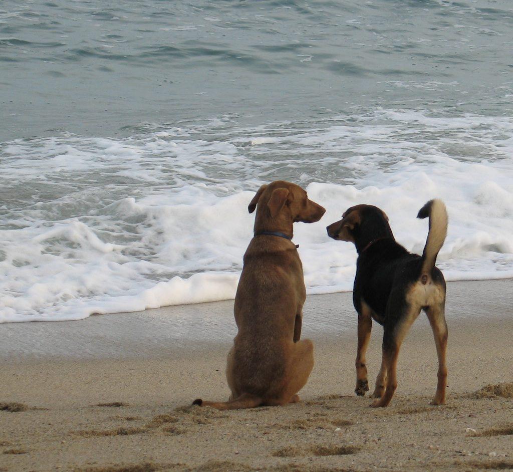 destinos pet friendly