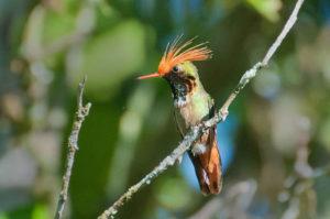 Especies animales mexicanas en peligro de extinción