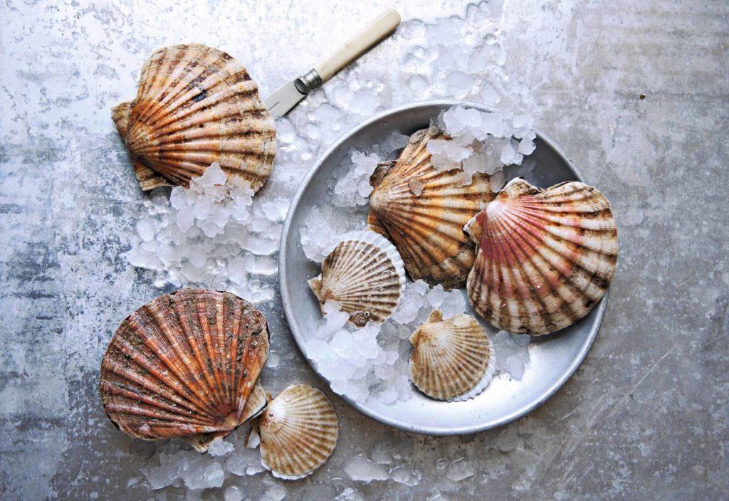 Vieiras, regalos del océano