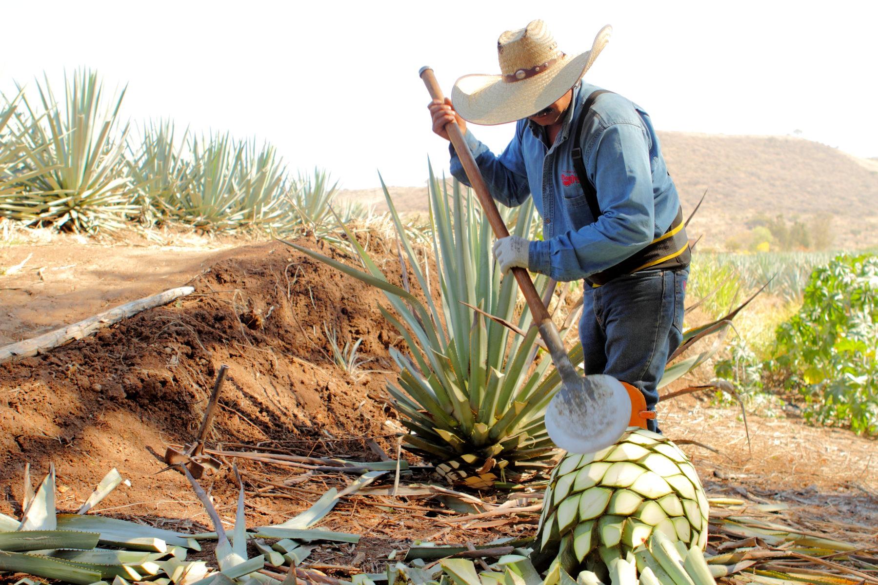 Don Julio: legado tequilero