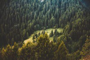 Bosques de la Ciudad de México