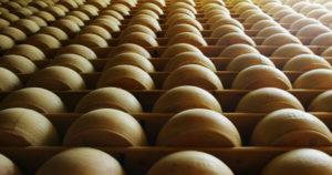 Roban queso Parmigiano-Reggiano en Italia