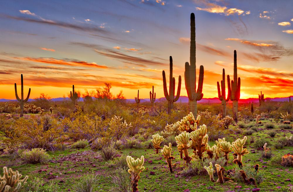 Desiertos de México