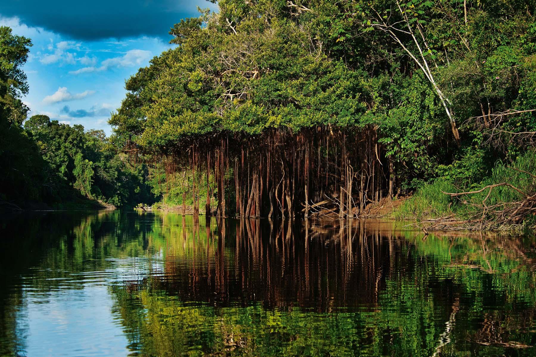 La selva amazónica peruana: el paraíso en la Tierra