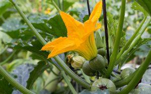 Las flores en la cocina: encanto mexicano natural