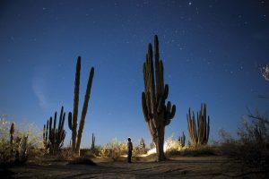 Baja California, explosión de vida