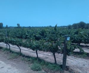Born to be wine: amor por el vino