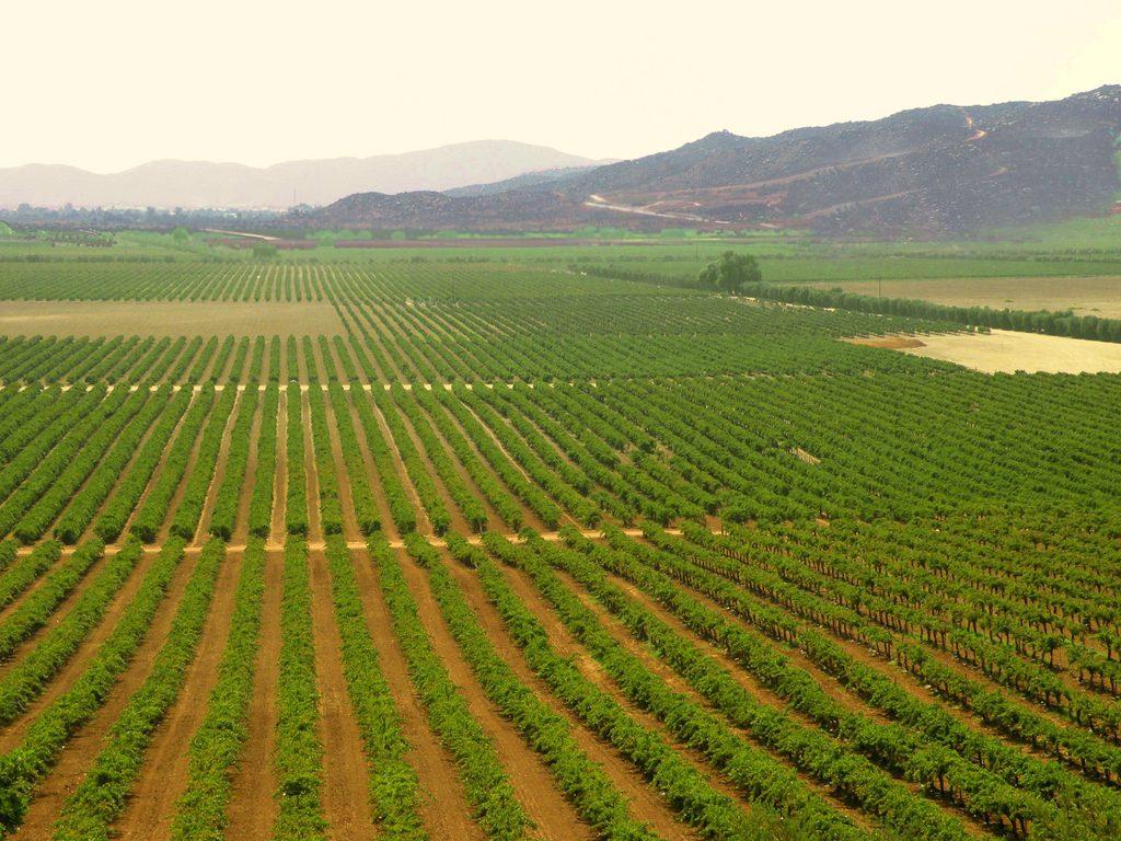 vitivinícolas