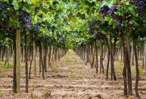 Regiones vitivinícolas de México