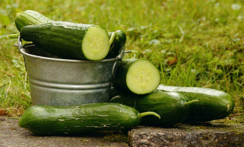 Pepino: ¿fruto u hortaliza?