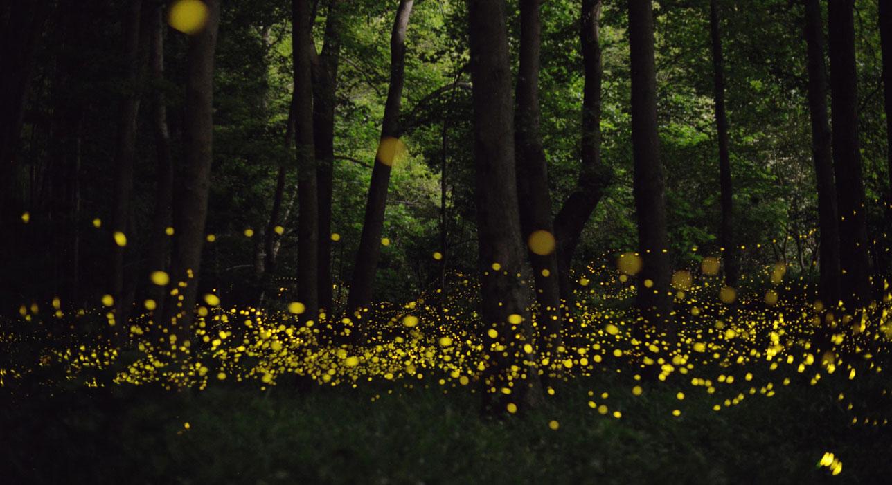 Santuarios de luciérnagas en México
