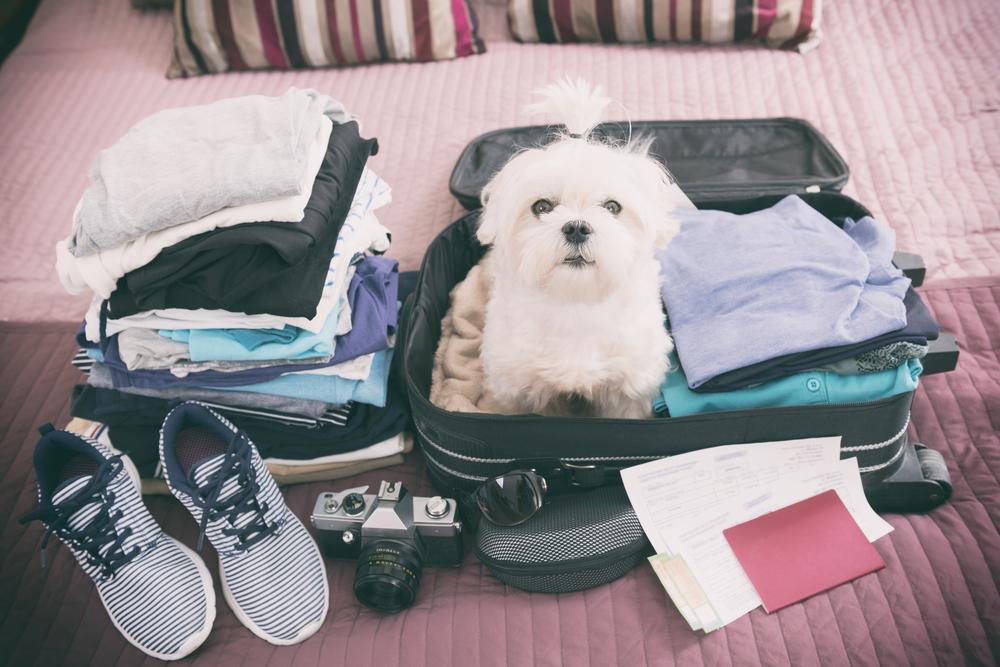 Viaja por el mundo con tu mascota con KLM
