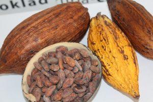 Cacao es México… y para el mundo Chocolate