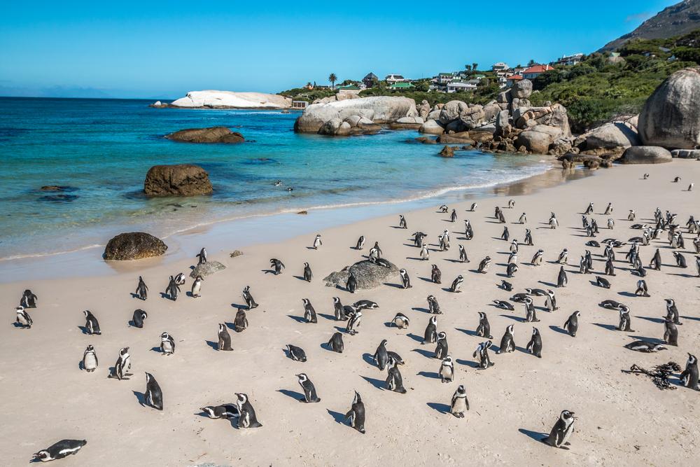 Lugares imperdibles de Sudáfrica