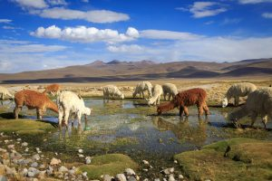 Arequipa, la Ciudad Blanca del Perú