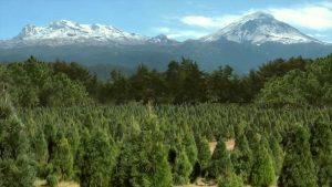 Dónde comprar tu árbol de Navidad