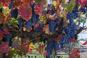 Desfile de vinos californianos en el Grand Tasting 2018