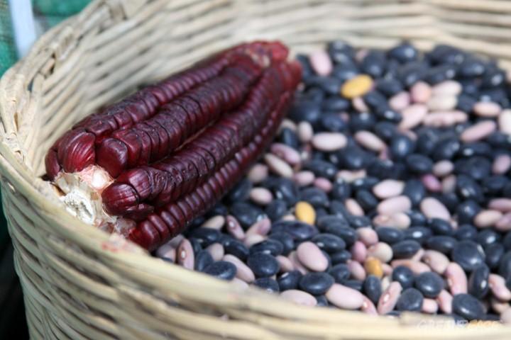Sin transgénicos: exige comida sana