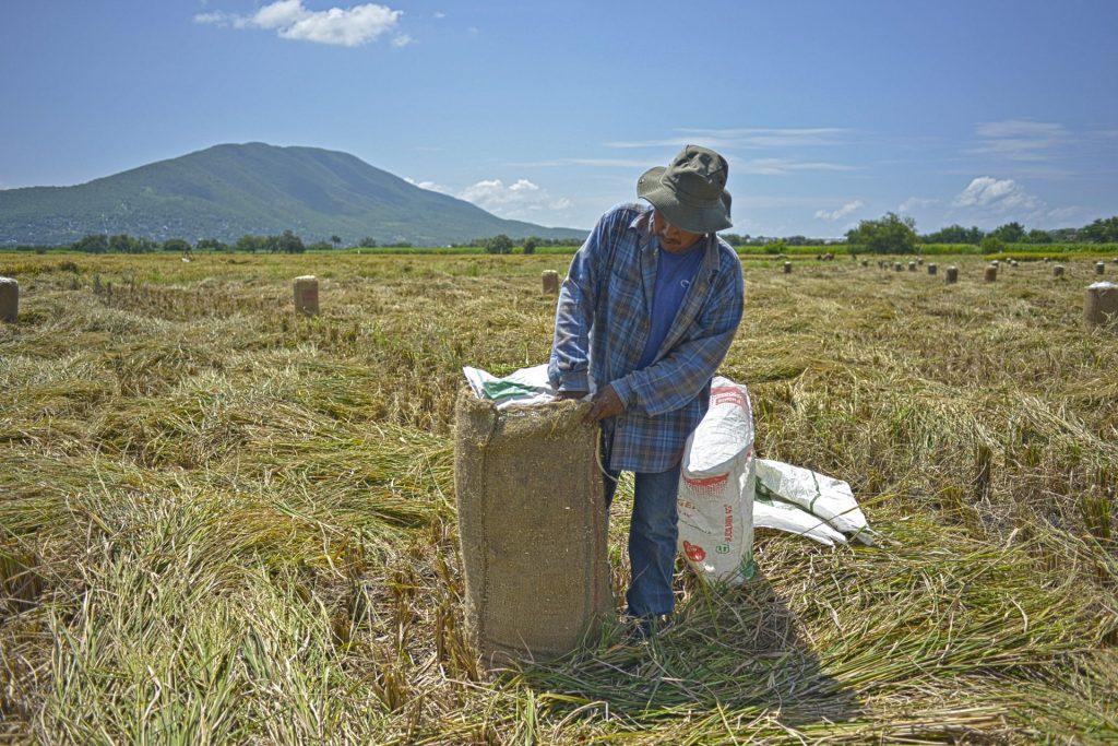 Para arroz, ¡el de Morelos!