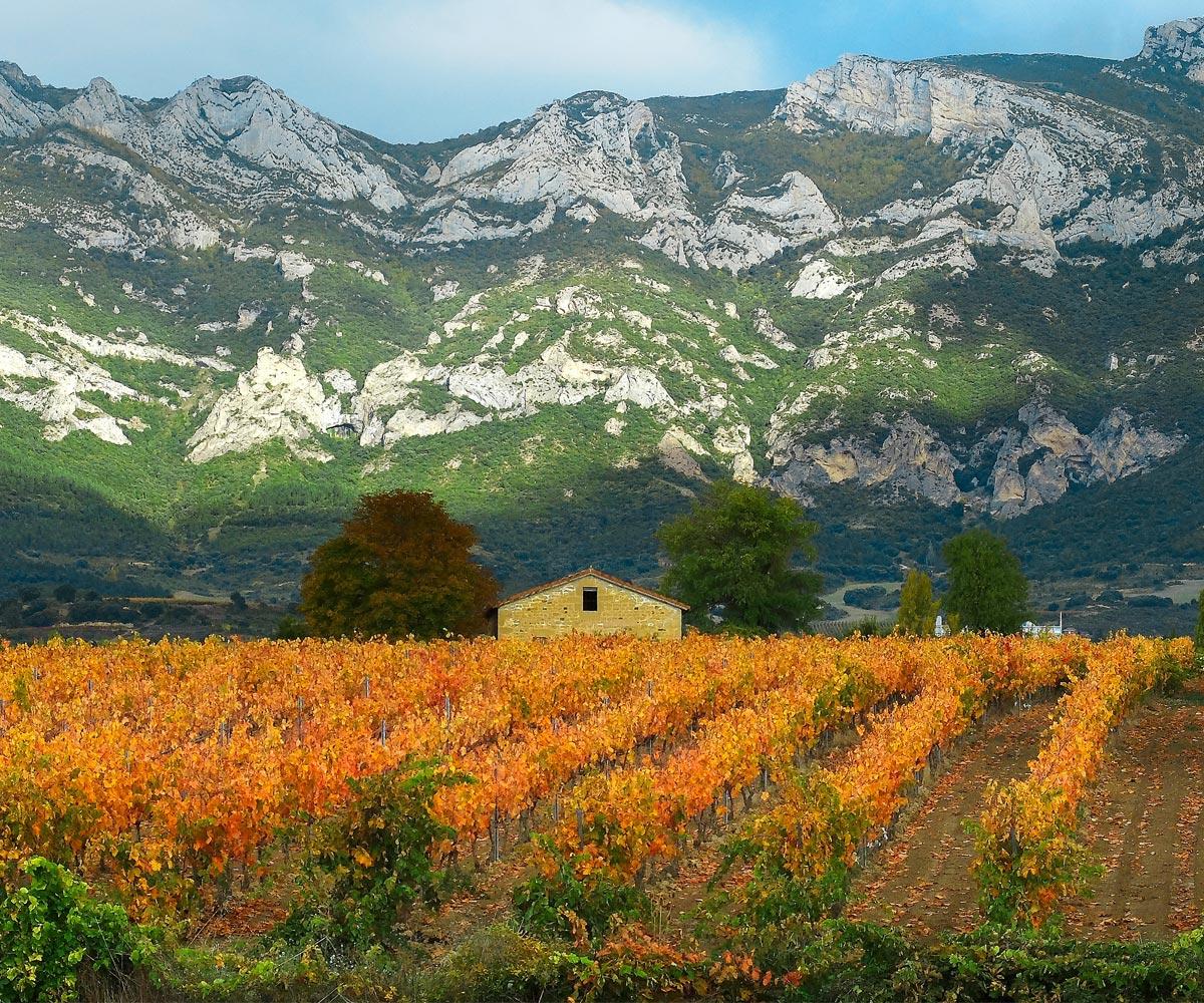 Gómez Cruzado: desde la Rioja, con esencia mexicana