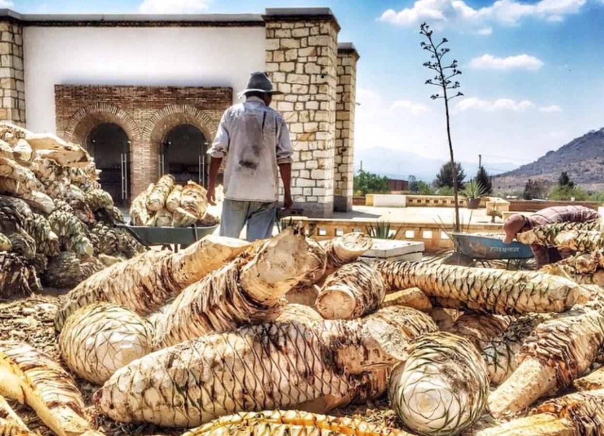 Festival Comali con sabor a Mezcal Oro de Oaxaca