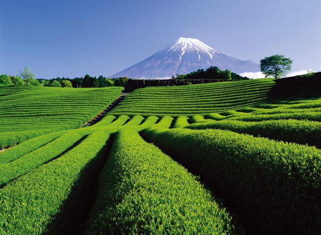 De Japón… ¡Sencha!