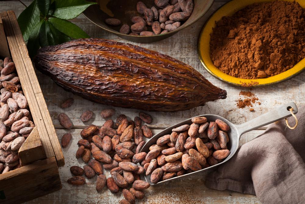 Martha Chapa presenta el libro Cacao: La Bebida de los Dioses