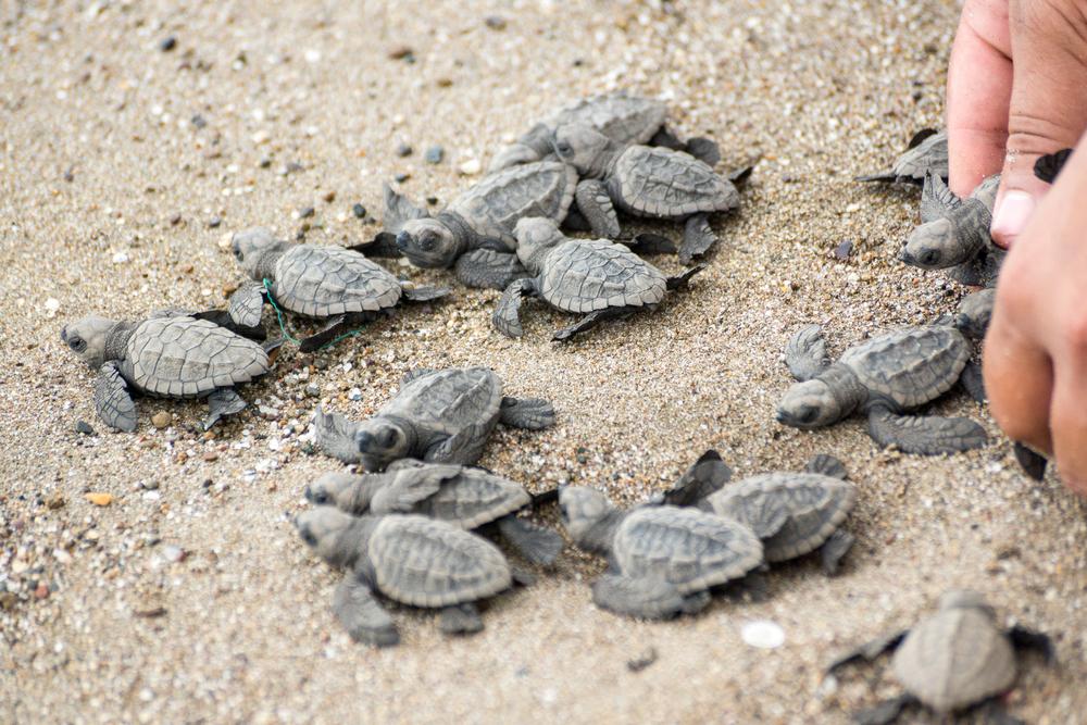 Visita Puerto Vallarta y ayuda a las tortugas marinas