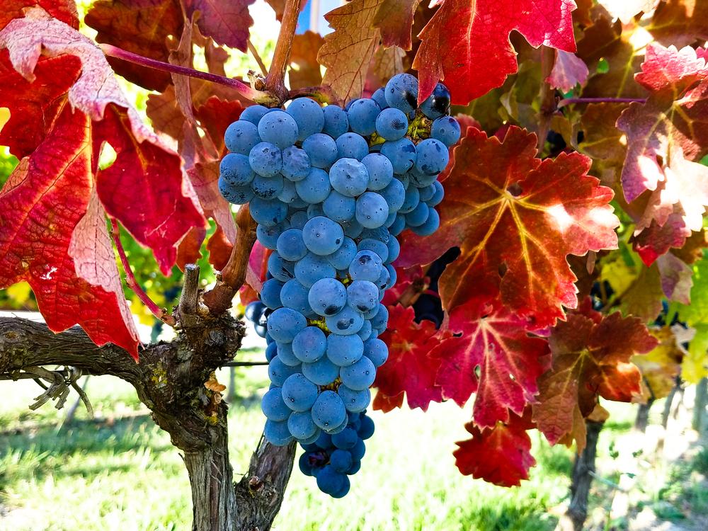 ¿Escamoles y gusanos maridados con vinos de La Rioja?