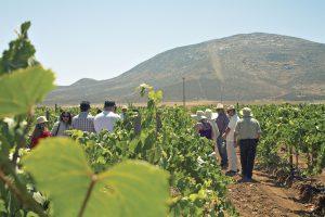 Fiestas de la Vendimia en Baja California: celebrar la cosecha