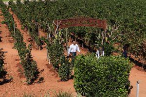 Tierra Adentro celebra su festival de las vendimias