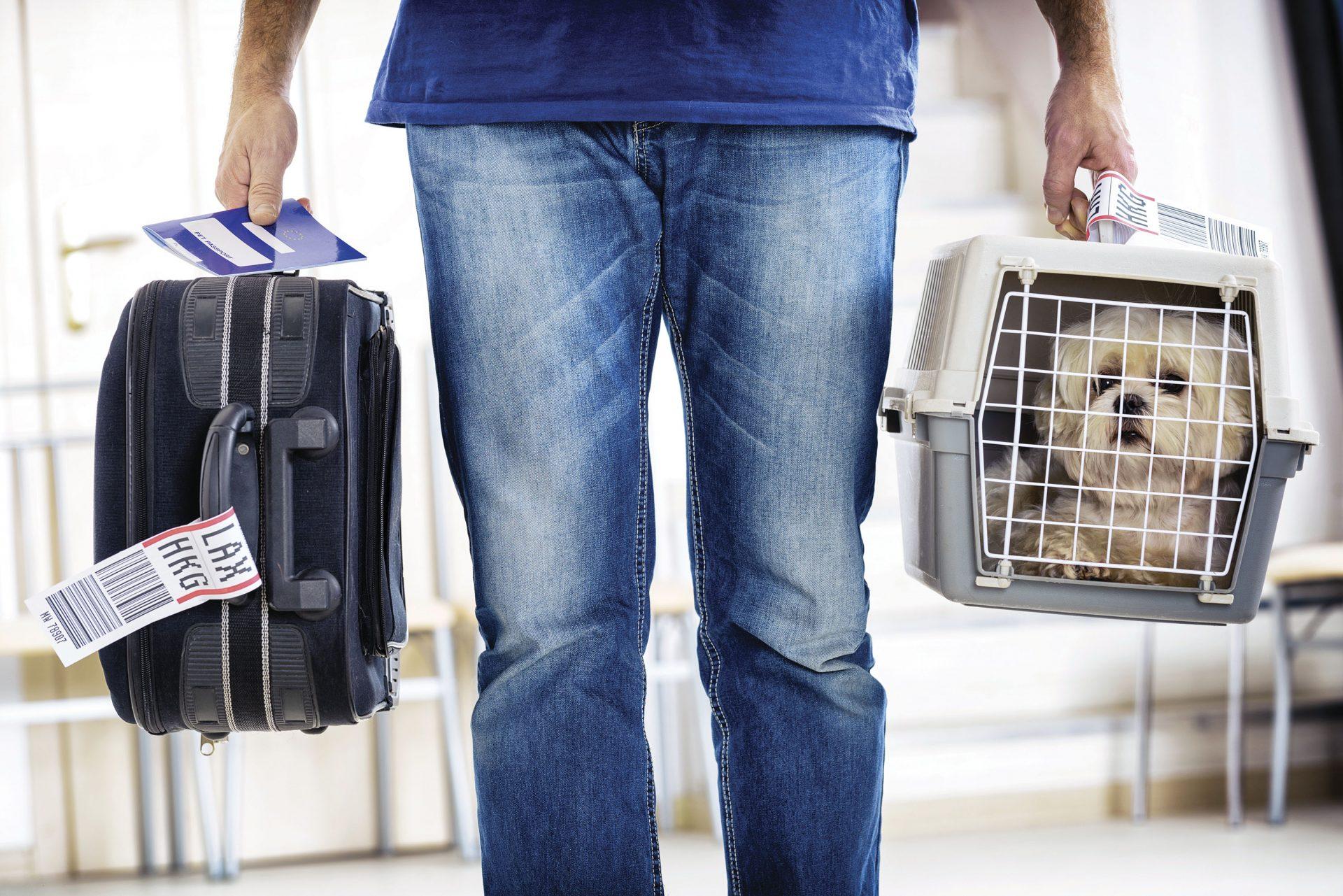 Viaja con tu mejor amigo a través de KLM