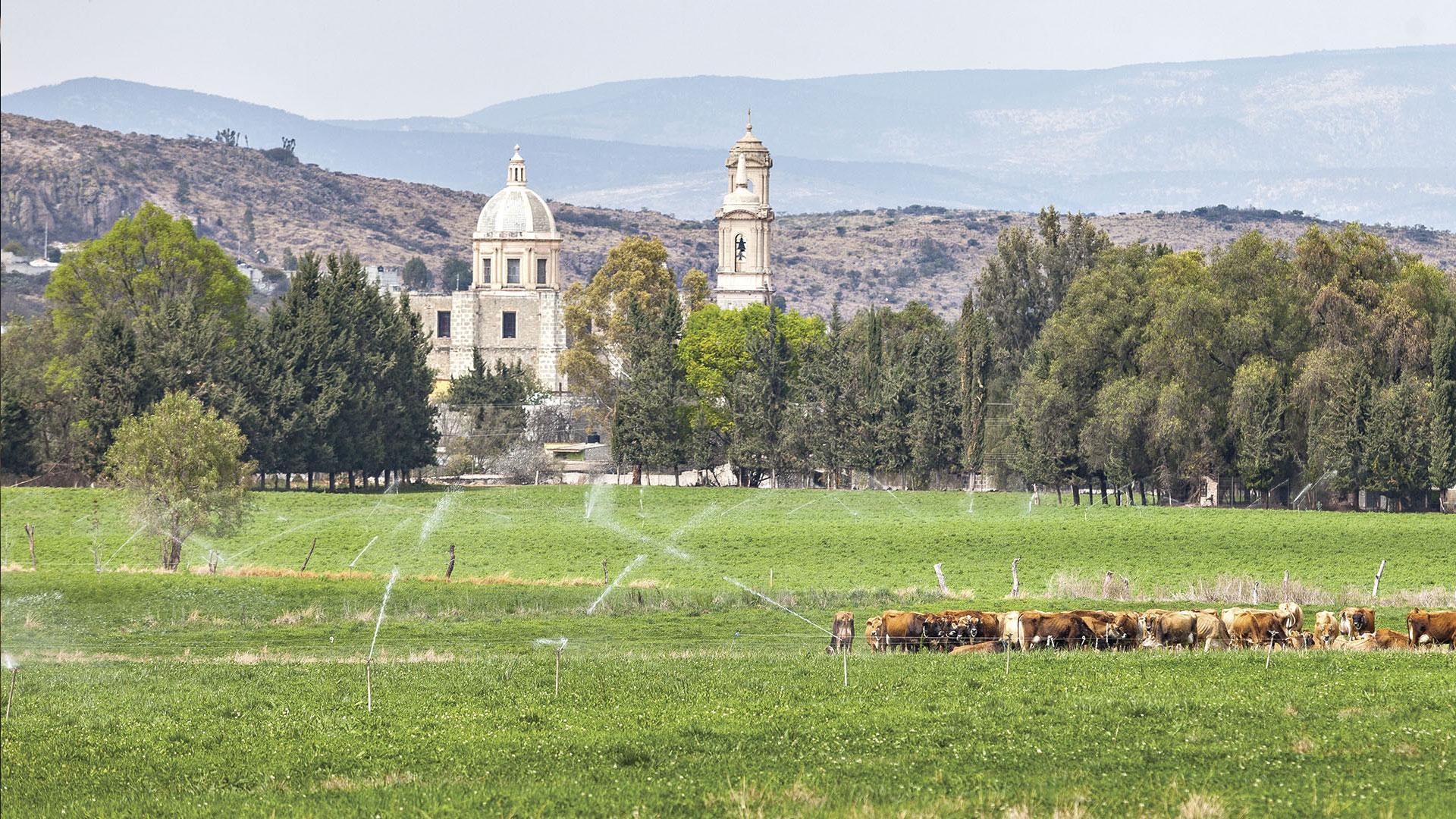 Ruta del queso y del vino en Querétaro